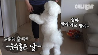 Download 이때까지만 해도 무척이나 신이 났던 왕티즈 솔이다 ㅣ Giant Maltese Dog Attends Maltese Meetup For The First Time Video