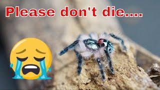 Download Quick Update - T.seladonia in death curl Video