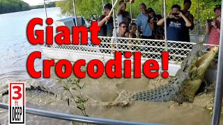 Download Giant Crocodile Encounter with ″Dominator″ Video