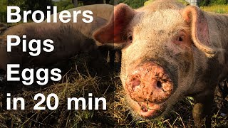 Download Raise 3 Types of Livestock in 20 Minutes a Day Video