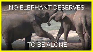 Download No Elephant Deserves to Be Alone Video