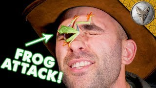 Download SURPRISE FROG ATTACK! Video