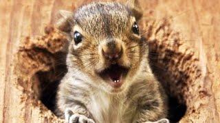 Download FUNNY SQUIRRELS ★ TOO CUTE! [Funny Pets] Video