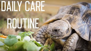 Download Tortoise Daily Care Routine Video