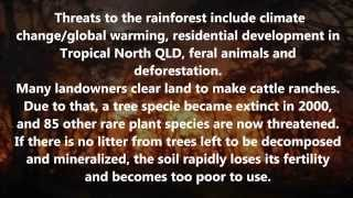 Download Facts and Threats: Daintree Rainforest Video