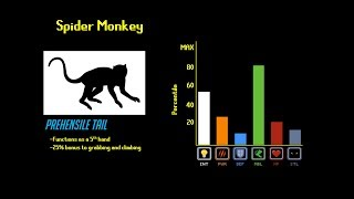 Download The Primate Tier List Video
