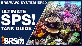 Download Ep20: The only SPS reef tank setup guide you'll ever need! - The BRS/WWC System Video