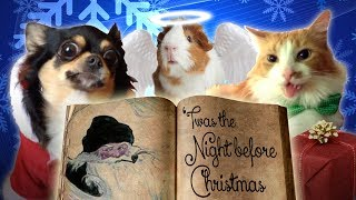 Download Pets Read Twas The Night Before Christmas Video
