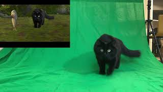 Download OwlKitty Behind The Scenes (How To Train Your Dragon) Video