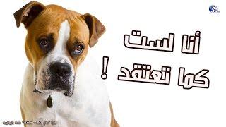 Download حقائق ومعلومات خاطئة عن الكلاب !   أليك التصحيح الأن Video