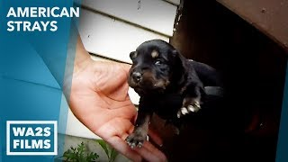 Download Rescue of Abandoned Mama Dog & 5 Puppies She Was Protecting Under a Porch - Real Hope For Paws Video