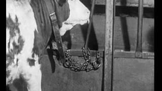 Download Vorschau: Zungenschlagen beim Rind und Koppen beim Pferd (Zeeb 1975) Video
