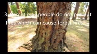 Download Deforestation Causes and Effects Video