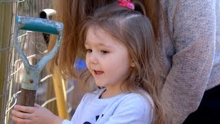 Download Adoptive parents, birth father battle for custody of 3-year-old girl | ABC News Video