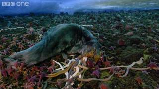 Download Life - Timelapse of swarming monster worms and sea stars - BBC One Video