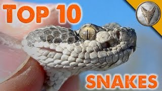 Download Top 10 Snake Encounters! Video