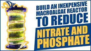 Download Build an inexpensive Macroalgae Reactor to reduce Nitrate and Phosphate Video