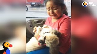 Download Girl Cries Over Dog's New Haircut | The Dodo Video