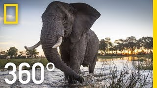 Download Elephant Encounter in 360 - Ep. 2 | The Okavango Experience Video