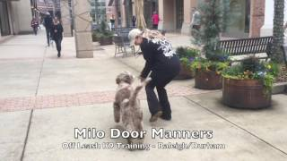Download 1yo Aussiedoodle ″Milo″ Before and After - Doodle Dog Training Raleigh Durham Video