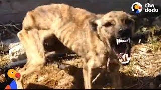 Download Starved, Scared Dog is Transformed By Love | The Dodo Video