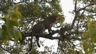 Download Safari Live's Sunset Safari Drive at 4:45 PM on Jan 23, 2018 ( Hosana ) Video