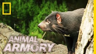 Download You Smelly Devil! | Animal Armory Video