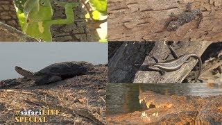 Download Reptile Awareness Day Video