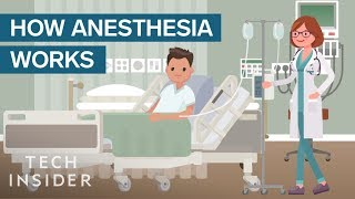 Download How Anesthesia Affects Your Brain And Body Video