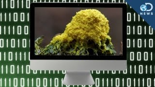 Download Living Computer Created With Slime Mold? Video