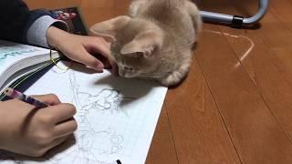 Download 息子の邪魔をする子猫がかわいい  The kitten get in the way Video