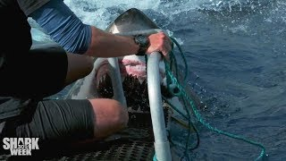 Download The Closest Calls | Shark Week's Most Intense Encounters Video