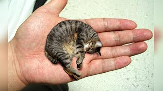 Download THE 10 SMALLEST CAT BREEDS In The World Video