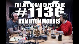 Download Joe Rogan Experience #1136 - Hamilton Morris Video