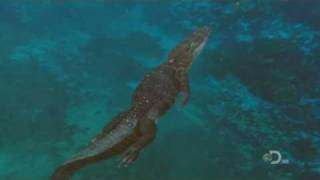 Download Mega Beasts: T-Rex of the Deep (HD Quality) [Part 2/5] Video