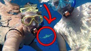 Download Sharks ate us lol (JackAsk #86) Video