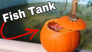 Download PUMPKIN FISH TANK With REAL FISH!! Video