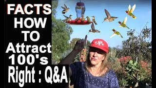 Download EASY Hummingbird Recipe for Healthy Birds with Questions and Answers Video