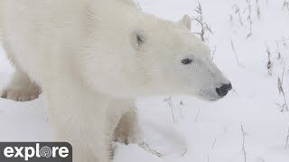 Download Cape East Camera - Churchill Cam, Wapusk National Park powered by EXPLORE.org Video
