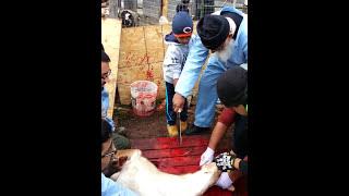 Download Yusuf Cutting a Goat - Qurbani Video