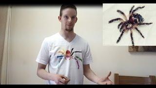 Download Unboxing Typhochlaena seladonia (my rarest spider) & Heteropoda davidbowie Video