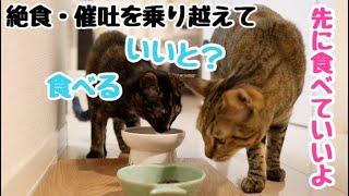 Download 【食べる事は生きる事】絶食・催吐処置を乗り越えて久しぶりのご飯!! Video