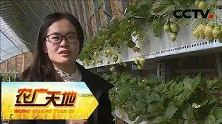 Download 《农广天地》 20180312 草莓公主的甜美事业   CCTV农业 Video