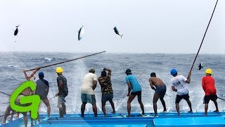 Download Catching tuna Maldivian style Video