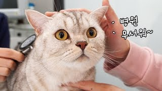 Download 무서우니까 대답 잘하는 고양이 - 소울이 병원가다 Video