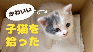 Download かわいい子猫を拾った。「ぽてと」と名付けて一緒に暮らすことに! Video