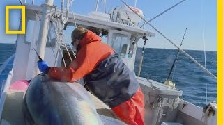 Download Catch of the Week - First Strike | Wicked Tuna: Outer Banks Video