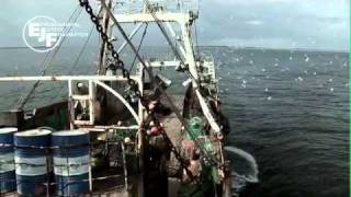 Download Deadly Catch - the impacts of illegal fishing in West Africa Video