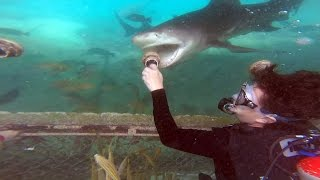 Download Animal Encounter at the Sea Aquarium Park in Curacao - Feeding Sting Rays, Sea Turtles, & Sharks Video