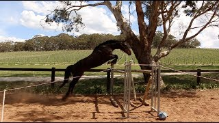 Download Finding out how high my horses can free jump Video